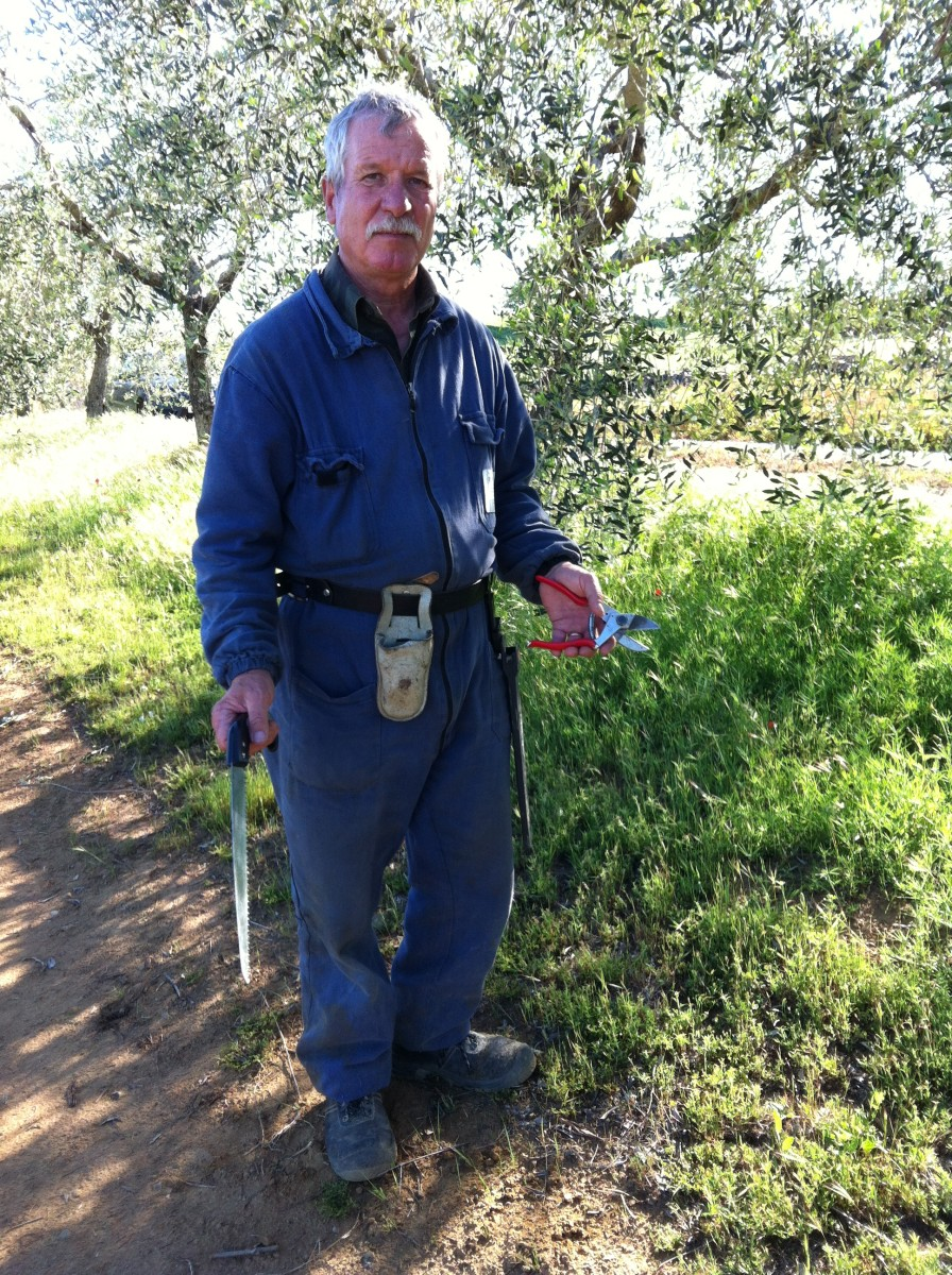 Franco Olive Grower from Tuscany with Pruning Tools