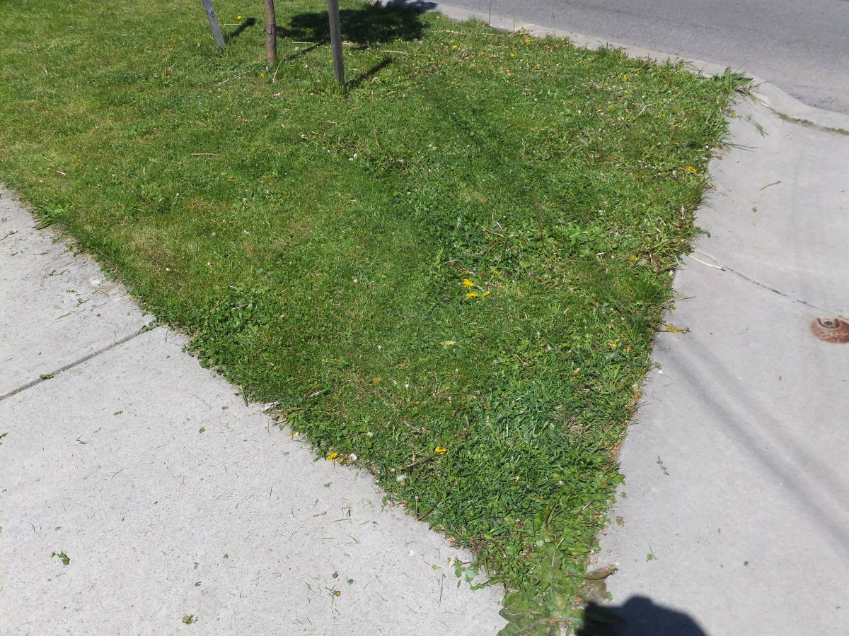 I took this picture after one pass of my Evolution lawn mower.  As you can see, it chopped down most of my beautiful dandelions.
