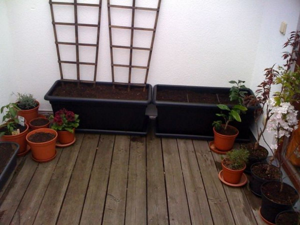 Tubs filled, plants re-potted, seeds planted.