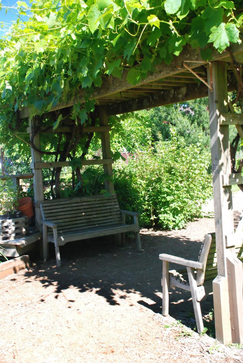 Easy vertical gardening ideas for beginners dengarden for Vegetable garden pergola