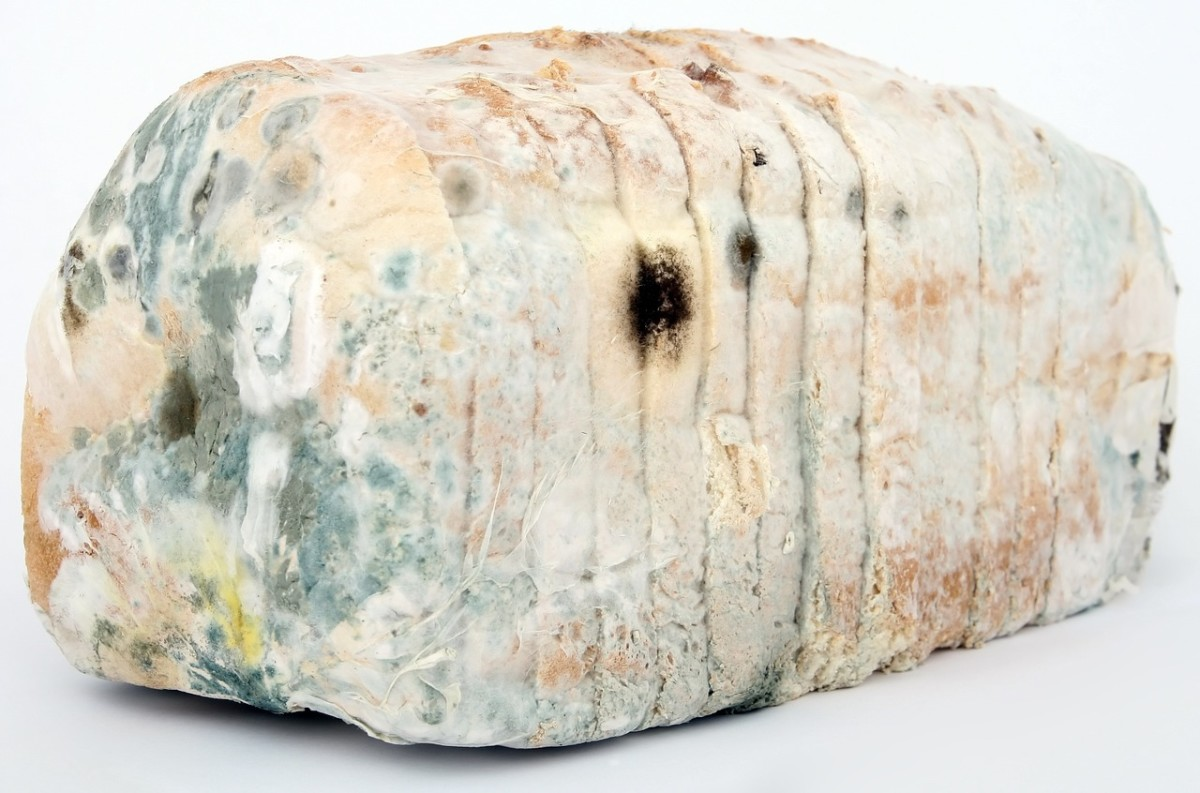 Keep mold at bay when storing bread with the use of paper towels.