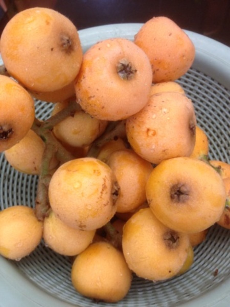 Loquats pulled off the vine, ready to be eaten.