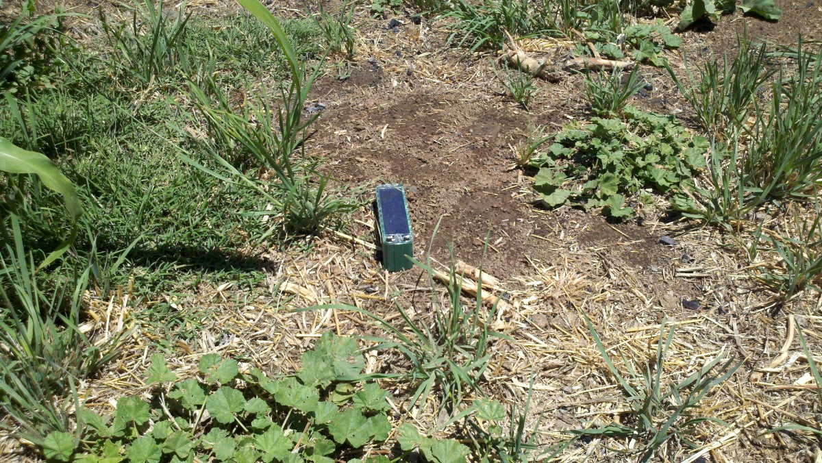 Picture of the solar powered sonic stakes we have in our garden to control gophers