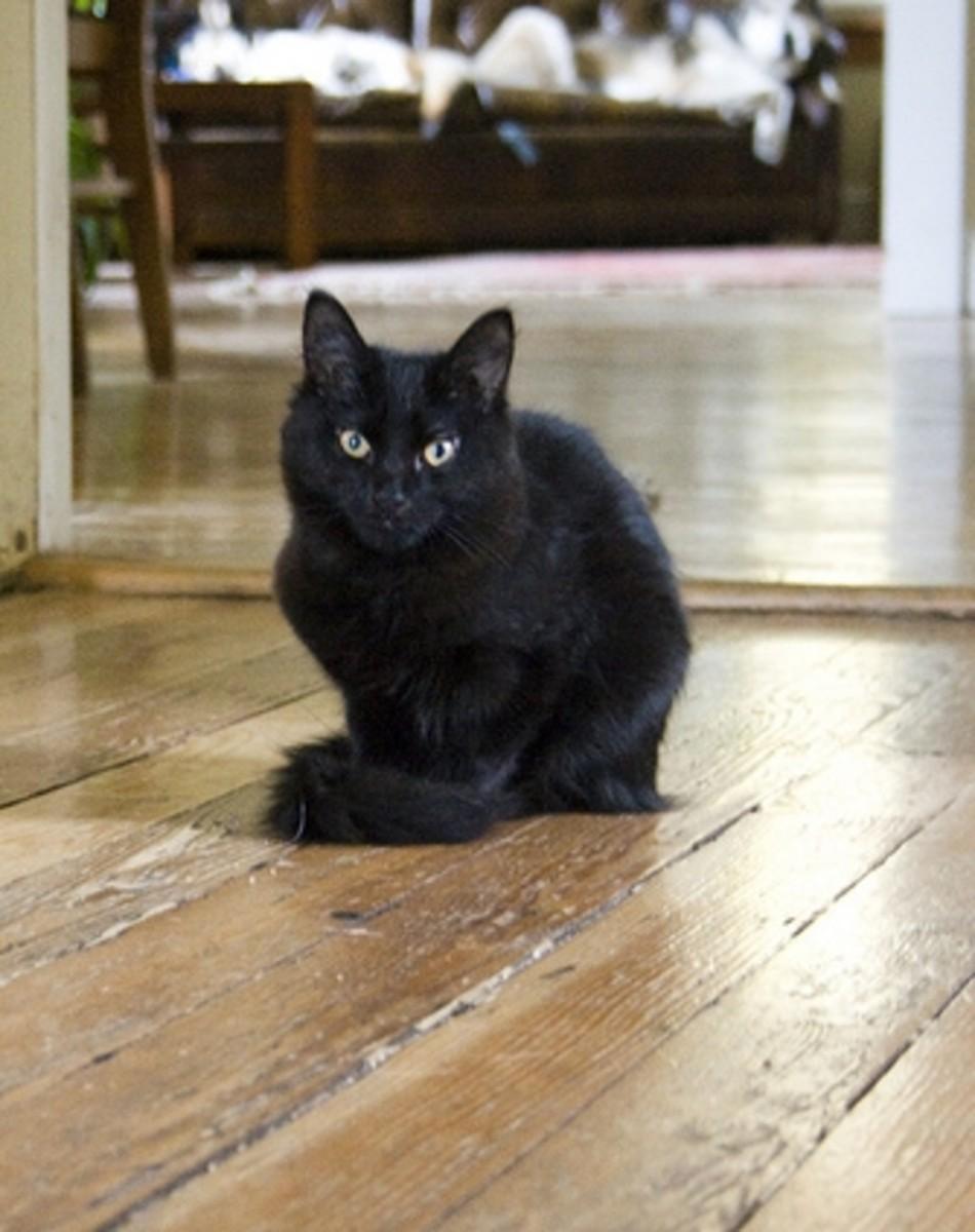 Shabby-cat floorboards (Creative Commons).