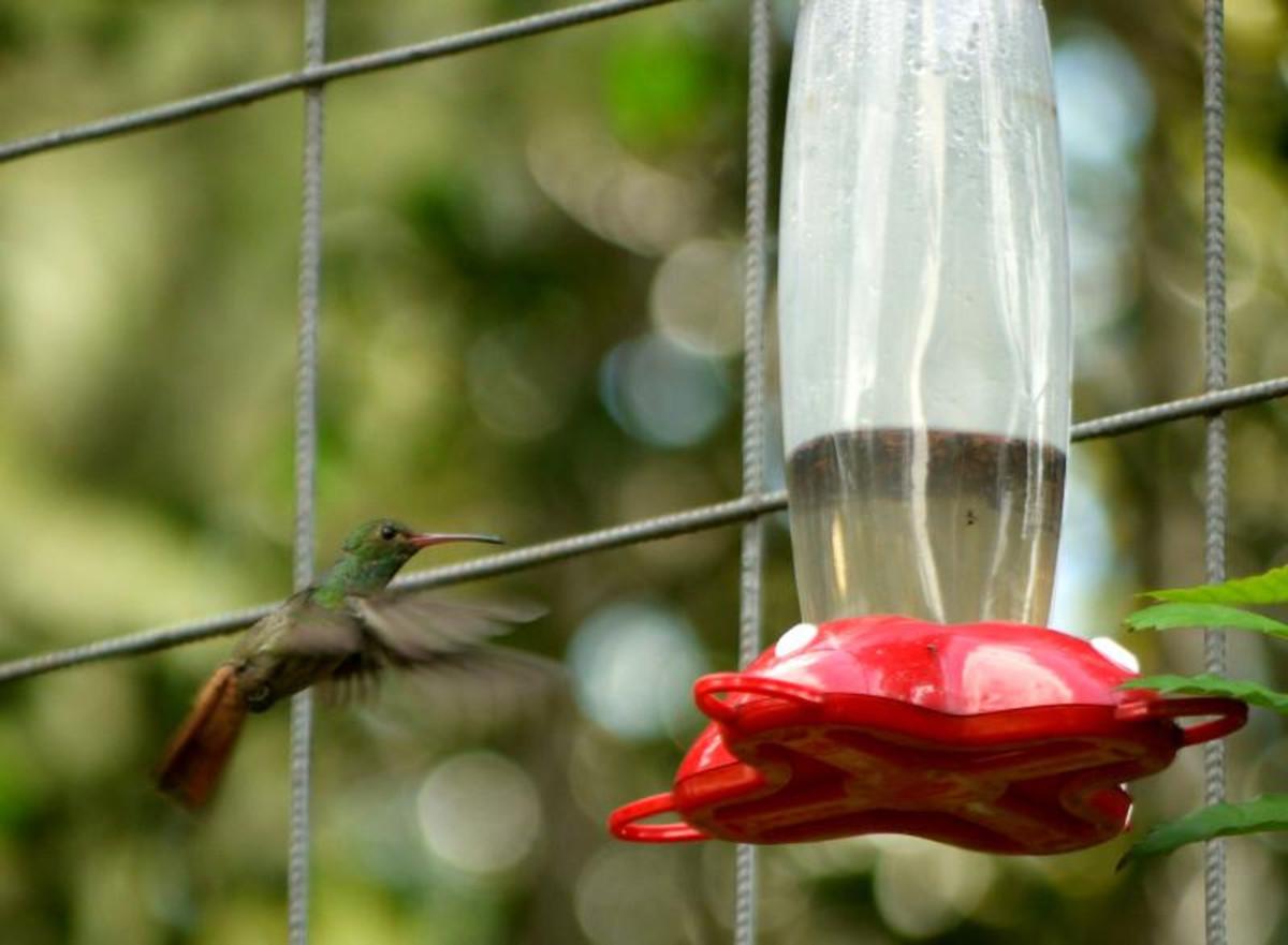 A bird approaches a feeder