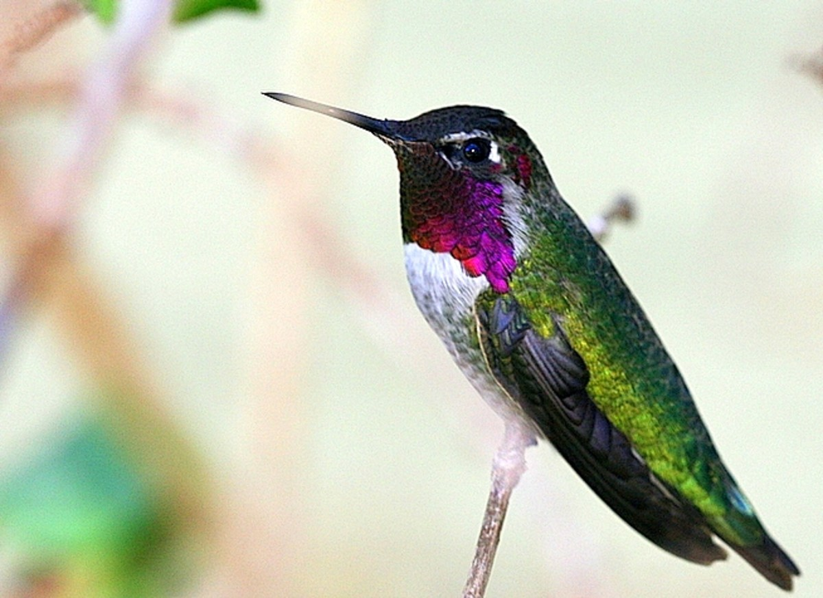 Attract more hummingbirds to your yard with yummy food!