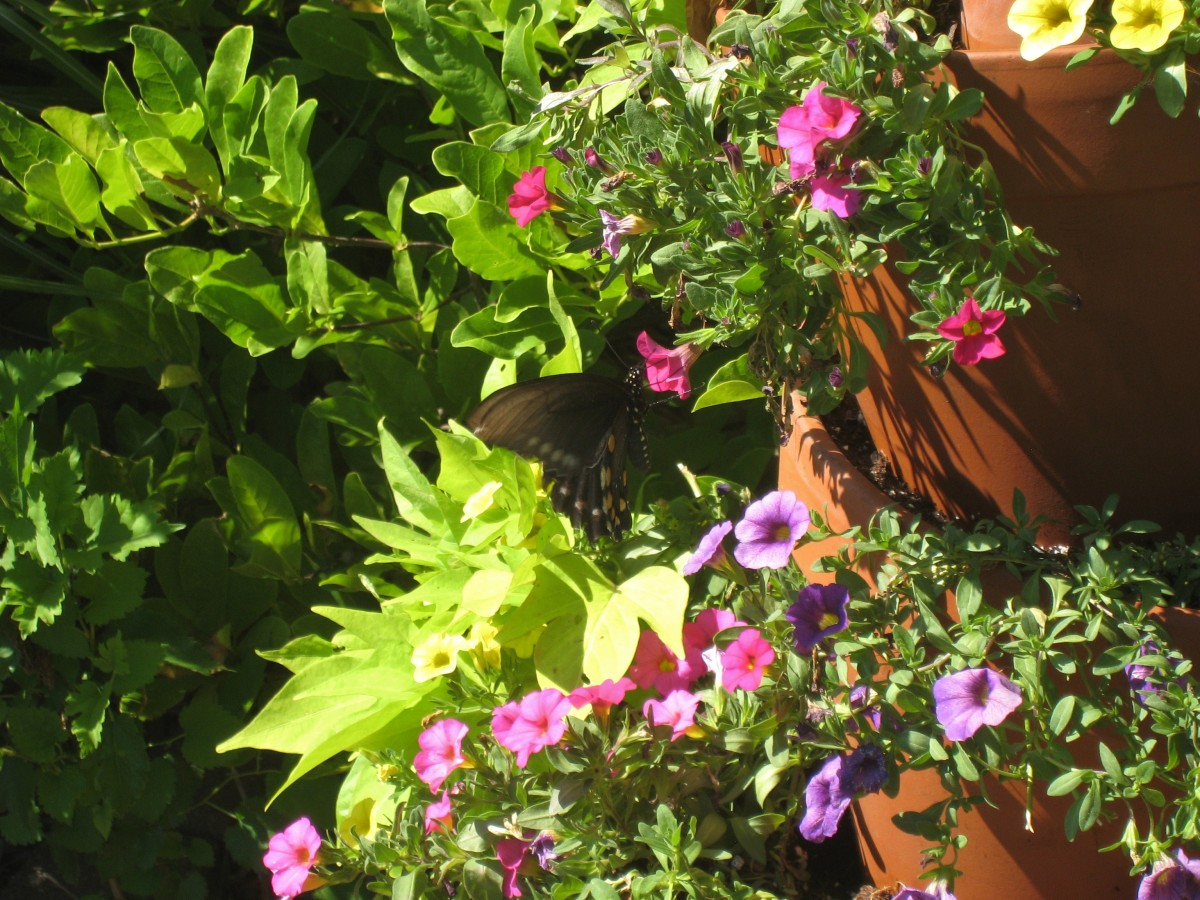 The vibrant colors of the calibrachoa used in this tower even attracts butterflies to your garden.
