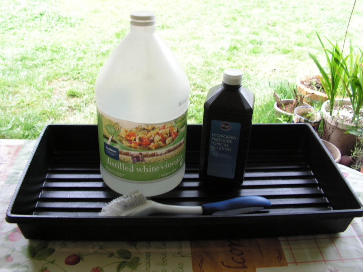 Clean seedling trays for reuse with white vinegar and 3% hydrogen peroxide as a safe and clean alternative to bleach.