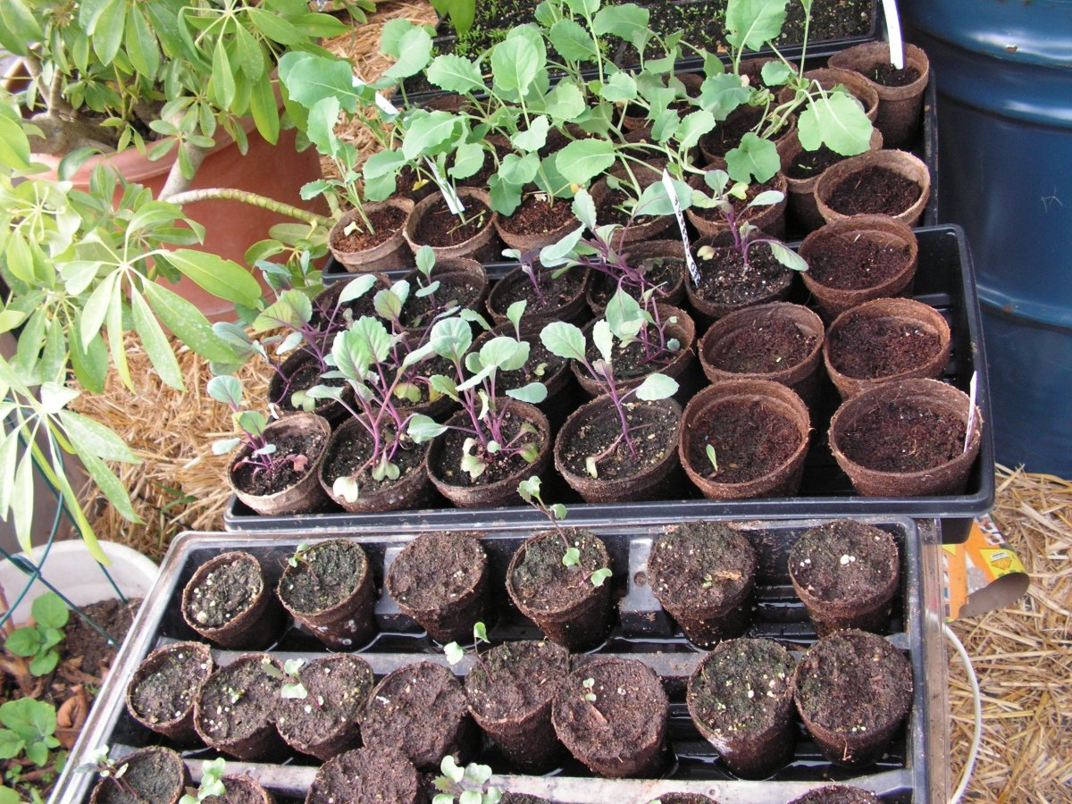 We use seedling trays a lot. These were used to start vegetables in our green house.