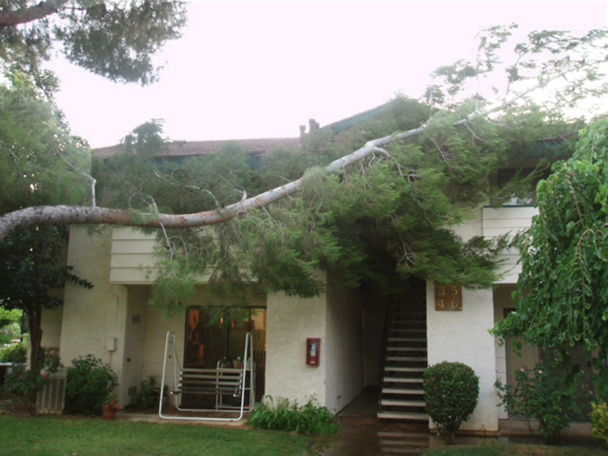 Trees that don't get enough water blow down in storms and cause damage.