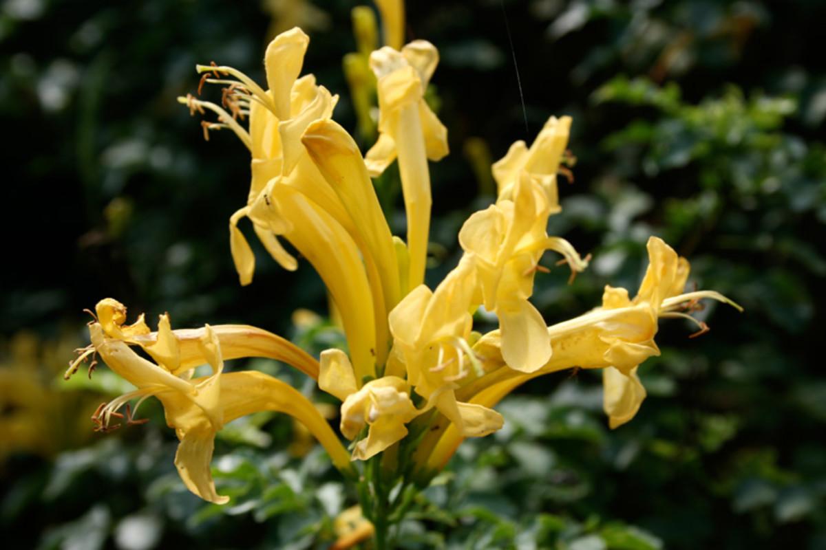 A list of fragrant flowers dengarden honeysuckle mightylinksfo