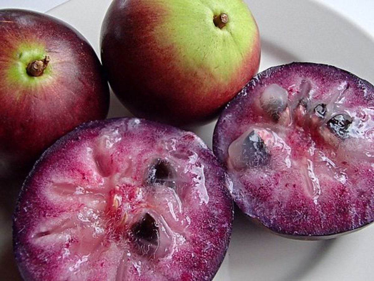 Purple variety of star apple