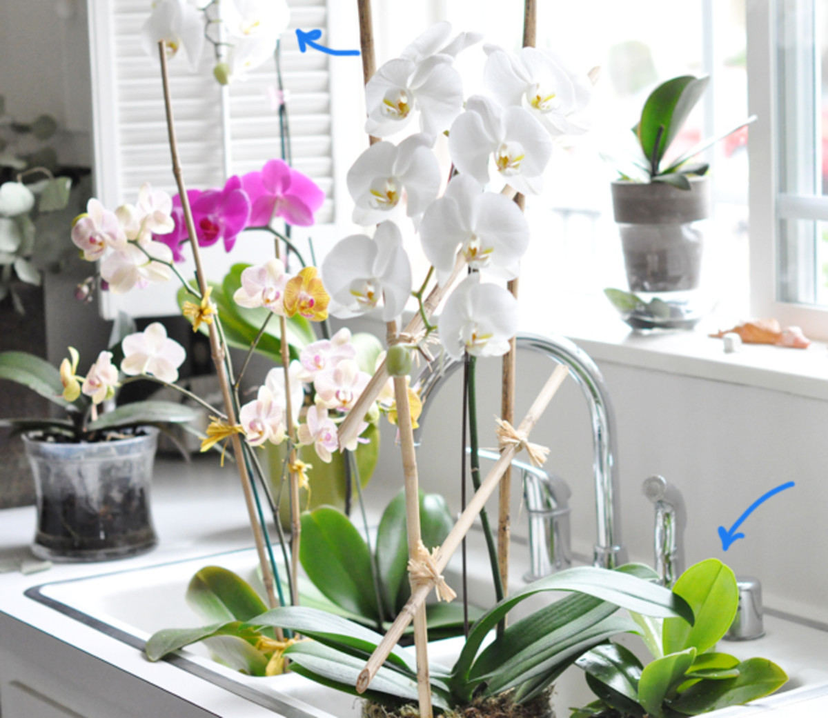 tips-on-how-to-keep-orchids-healthy