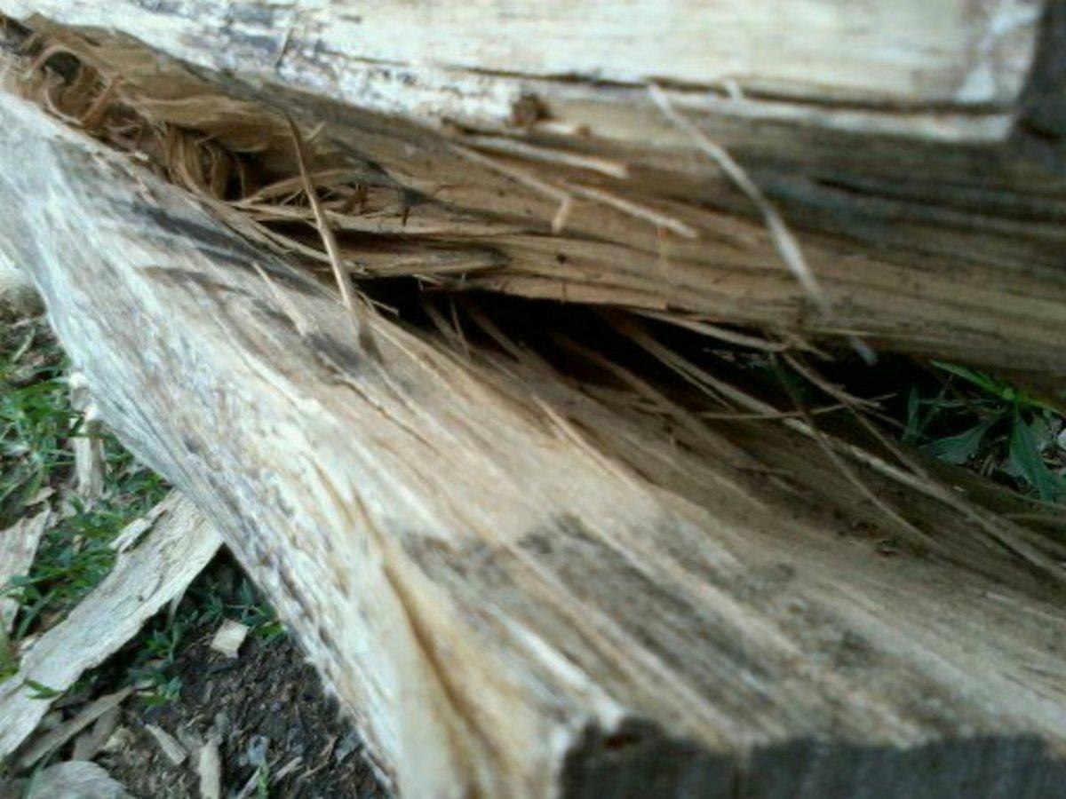 I've started splitting this little Black Locust log for fence rails.