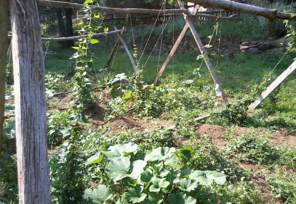 I turned this space with a hoe two springs ago. Growing hops and pumpkins now.