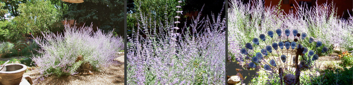 Outdoor Garden - Use blackwater on decorative plants, bushes, and trees outdoors.