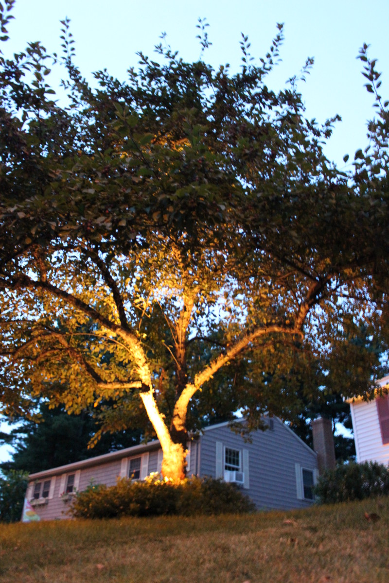 This is a 20watt low voltage landscape light place at the base of a crab apple tree.