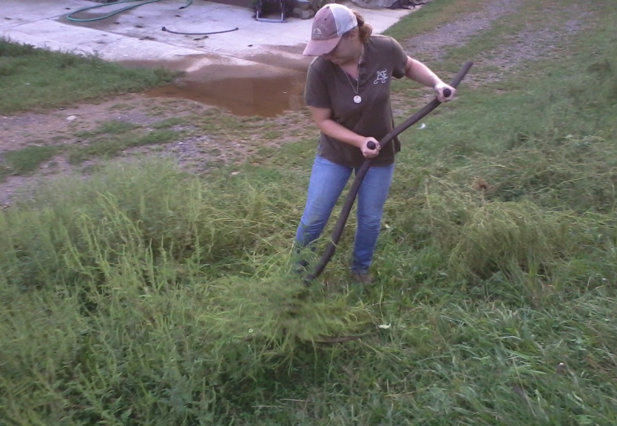 Mowing With a Scythe   Dengarden