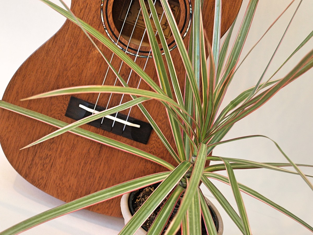 Plants may feel the vibrations of sound waves.