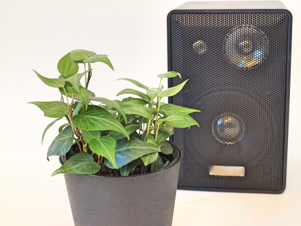 One study found that plants grew away from speakers playing rock music.