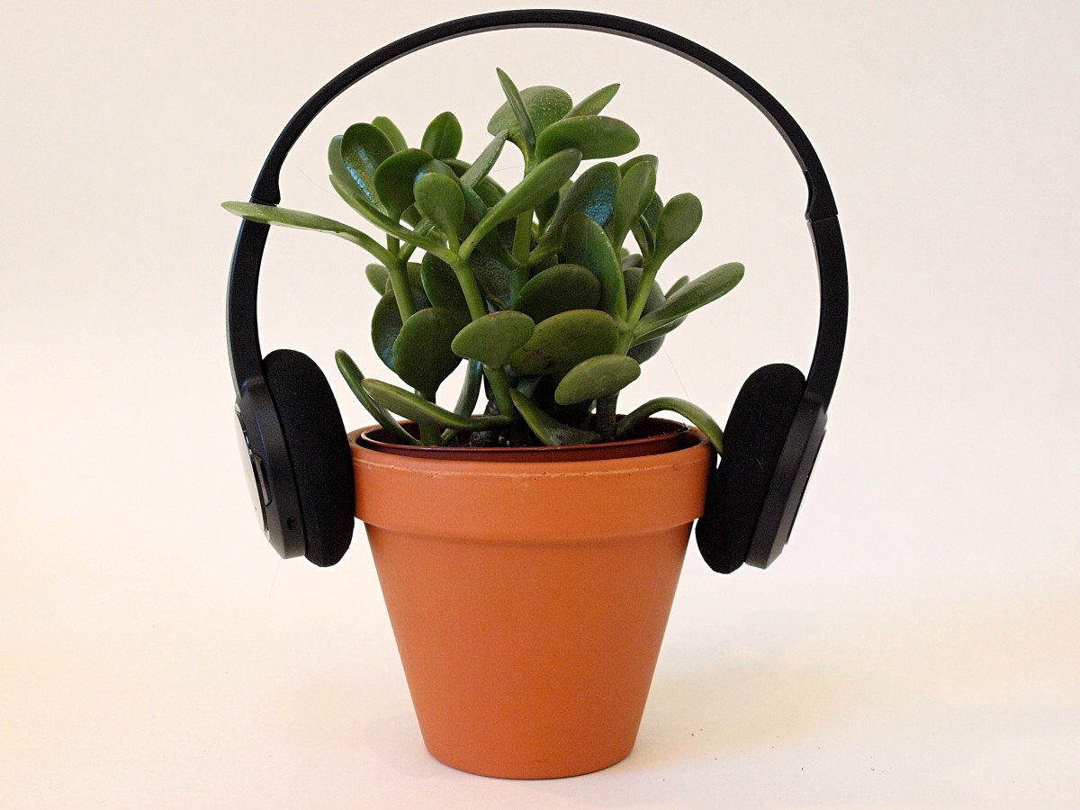 Some studies have found a correlation between playing music for plants and plant growth.