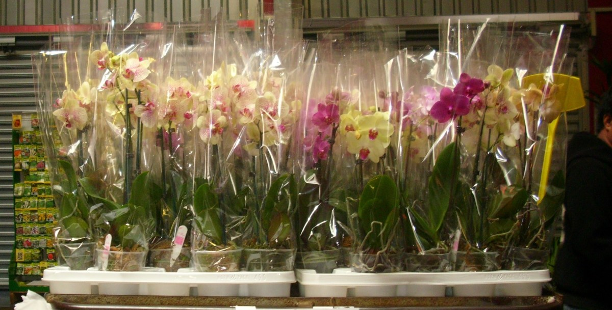 Different kinds of potted orchids.
