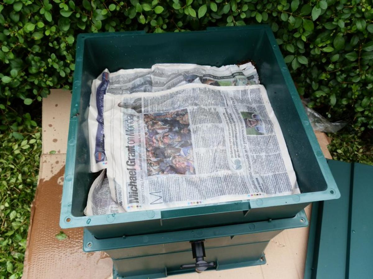 add layers of damp newspapers to the top of the tray