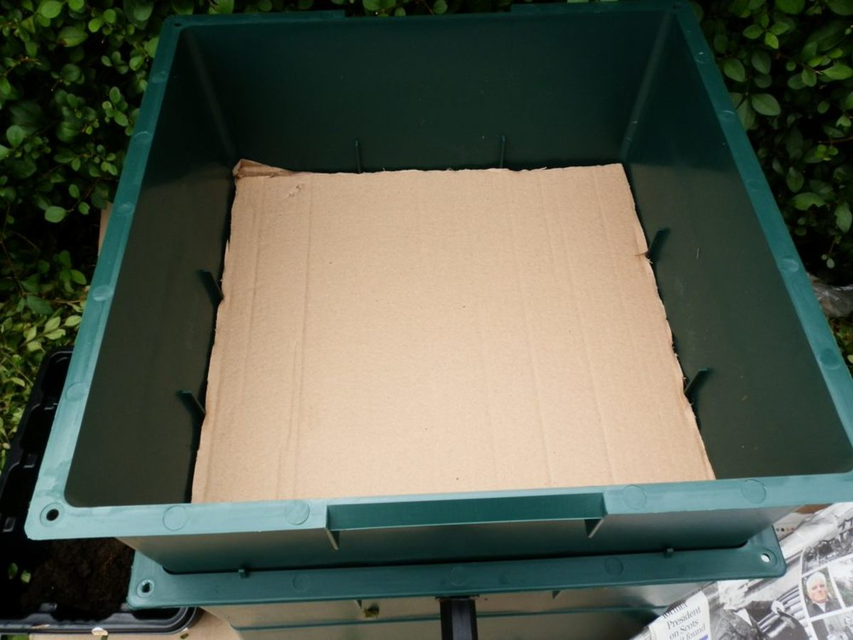 Laying cardboard at the base of the tray