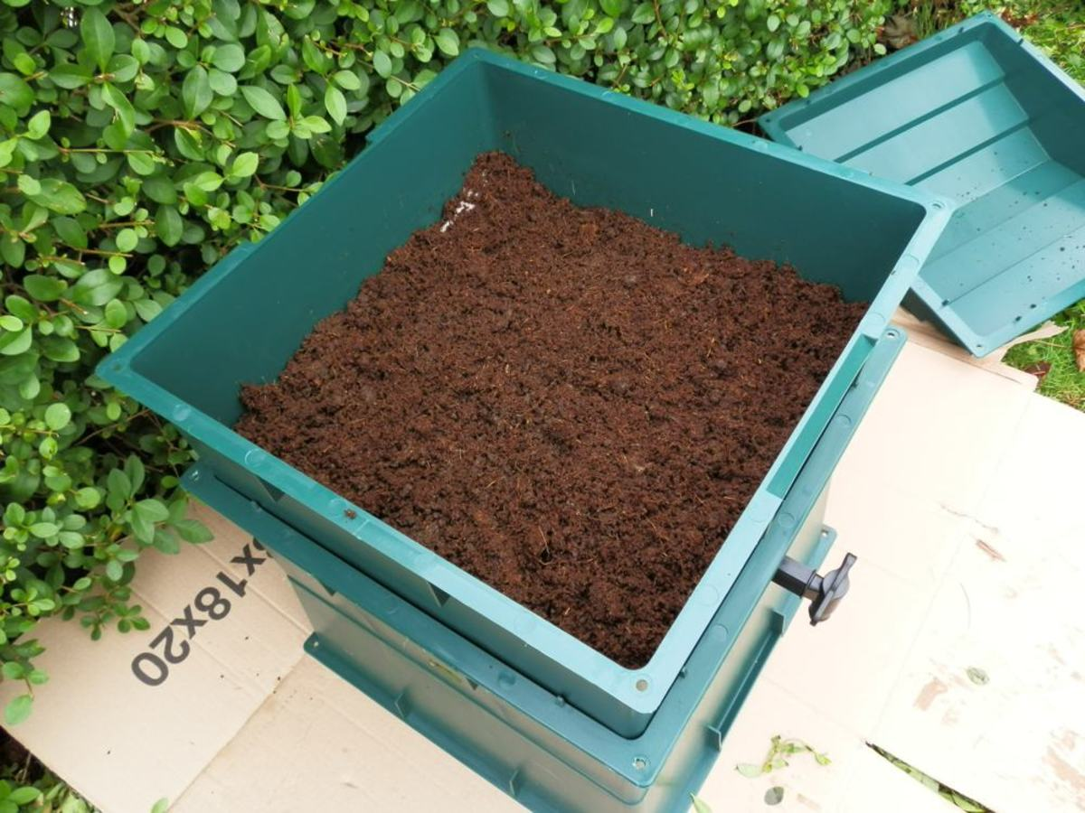 Add the coir/soil mix to the tray