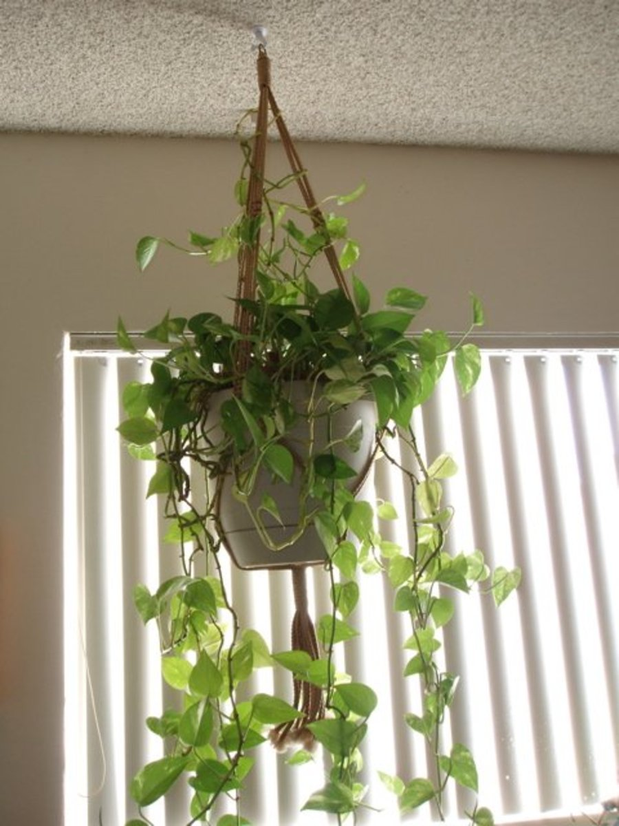 If you like crafts, it's easy to macrame hangers like this one to add height to your plants.