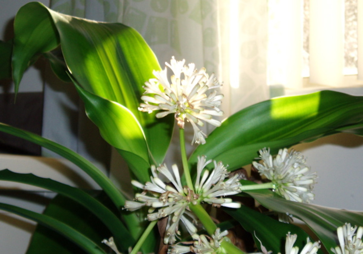 This flower had a surprisingly strong scent that filled the house.