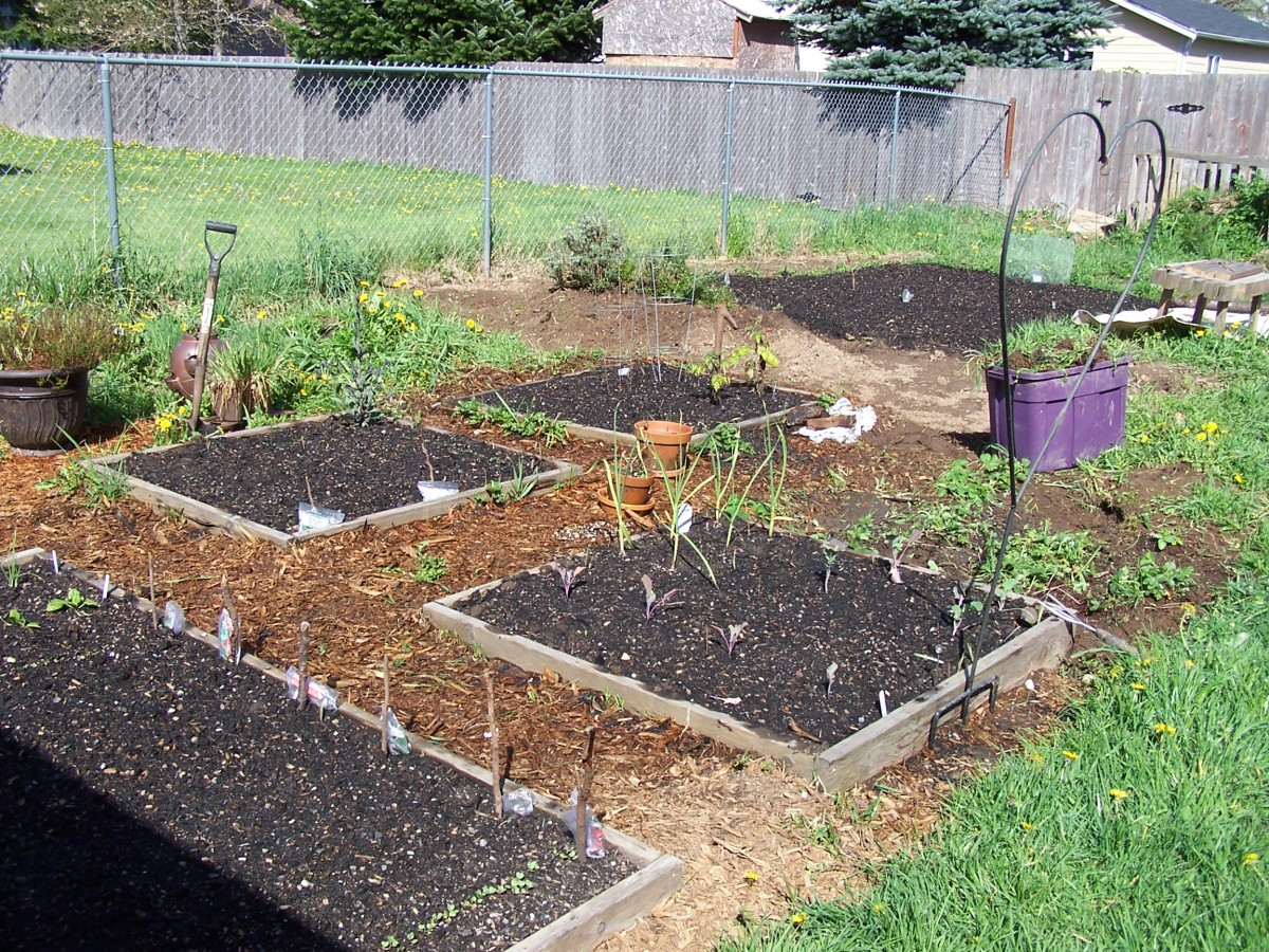 A garden with healthy soil, thanks to composting.