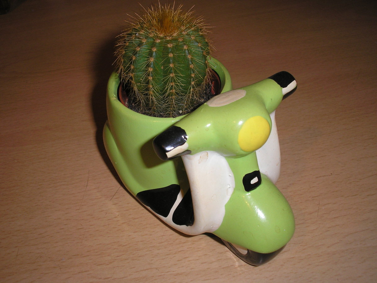 characteristics-of-cacti-plants