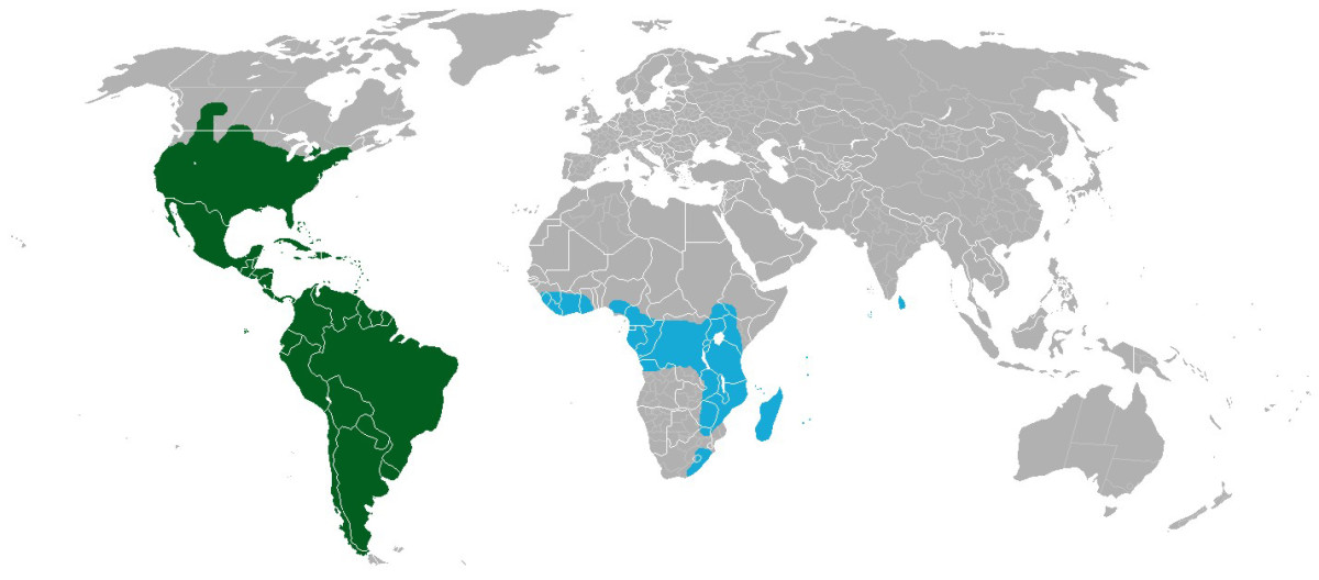 (Distribution of cacti; blue=Rhipsalis baccifera, green=all other cacti)