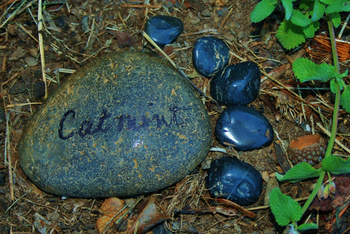 Footprint plant markers made from garden stones and river rocks are fun to make.