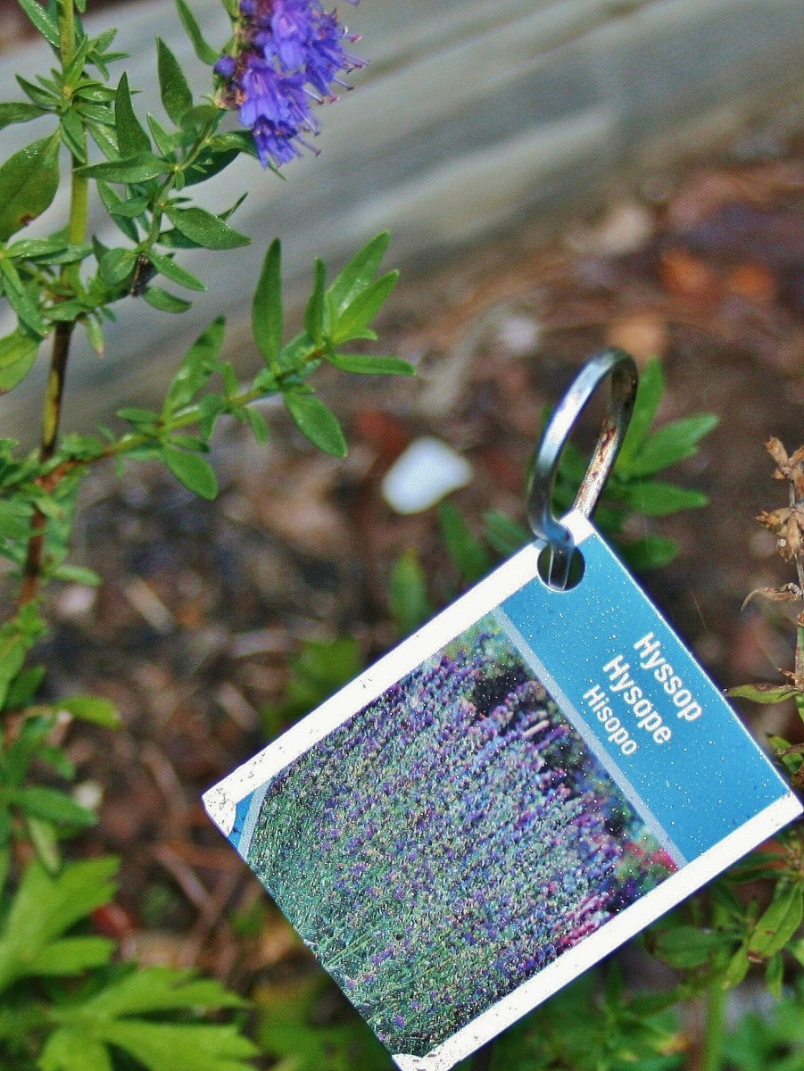 Don't throw out rusty skewers. Paired with plant tags, they make great tall plant markers.