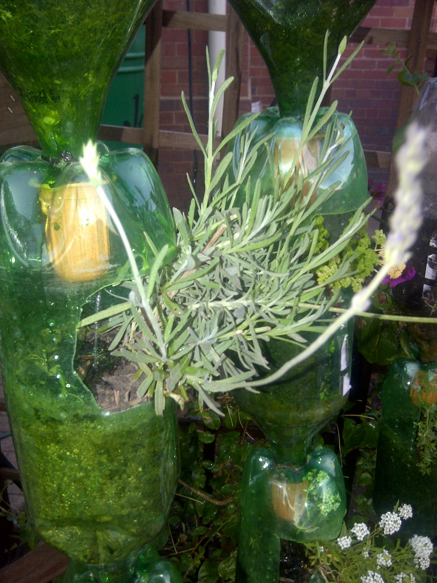 Lavender and parsley