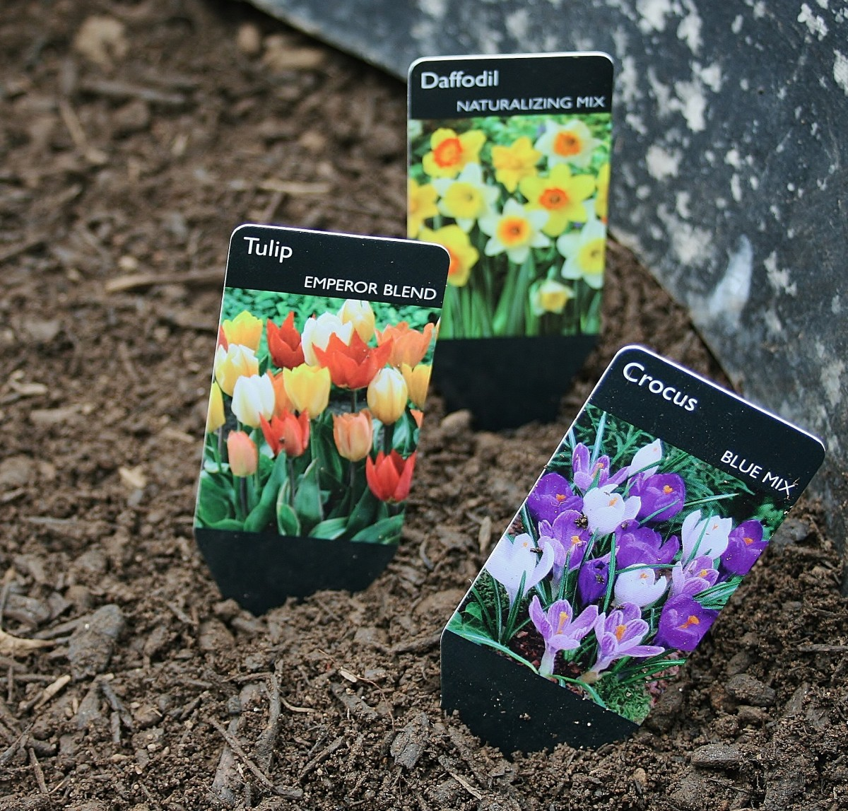 This year I chose crocus, tulips, and daffodils for our container bulb garden.