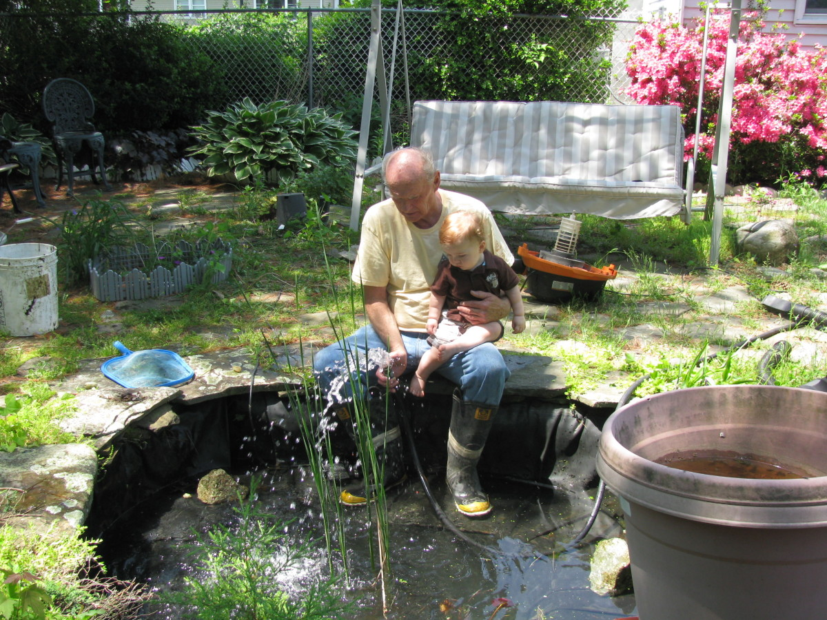 "Spring cleaning - pond with liner (""flower pot"" to right is actually a pond filter)."