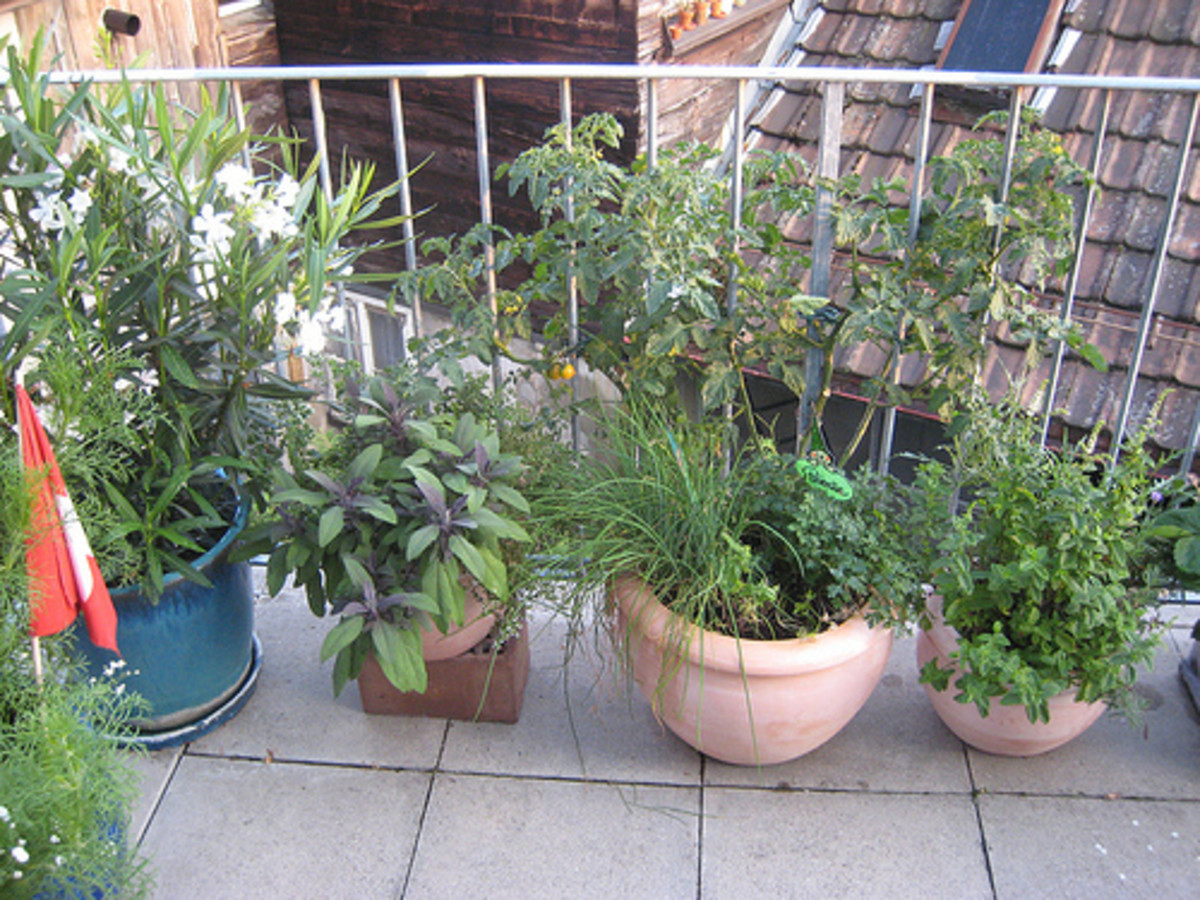 Herbs, flowers and vegetables can be grown on a balcony with good sun exposure.