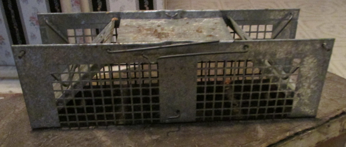 This is our well-worn, humane rodent trap. It has seen a lot of use over the years and still works very well!
