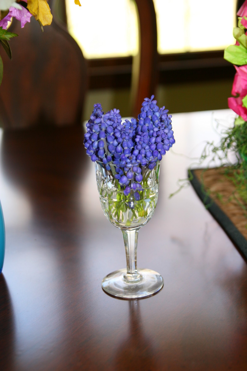 Grape Hyacinths have an intense perfume and make a wonderful miniature bouquet in early spring.