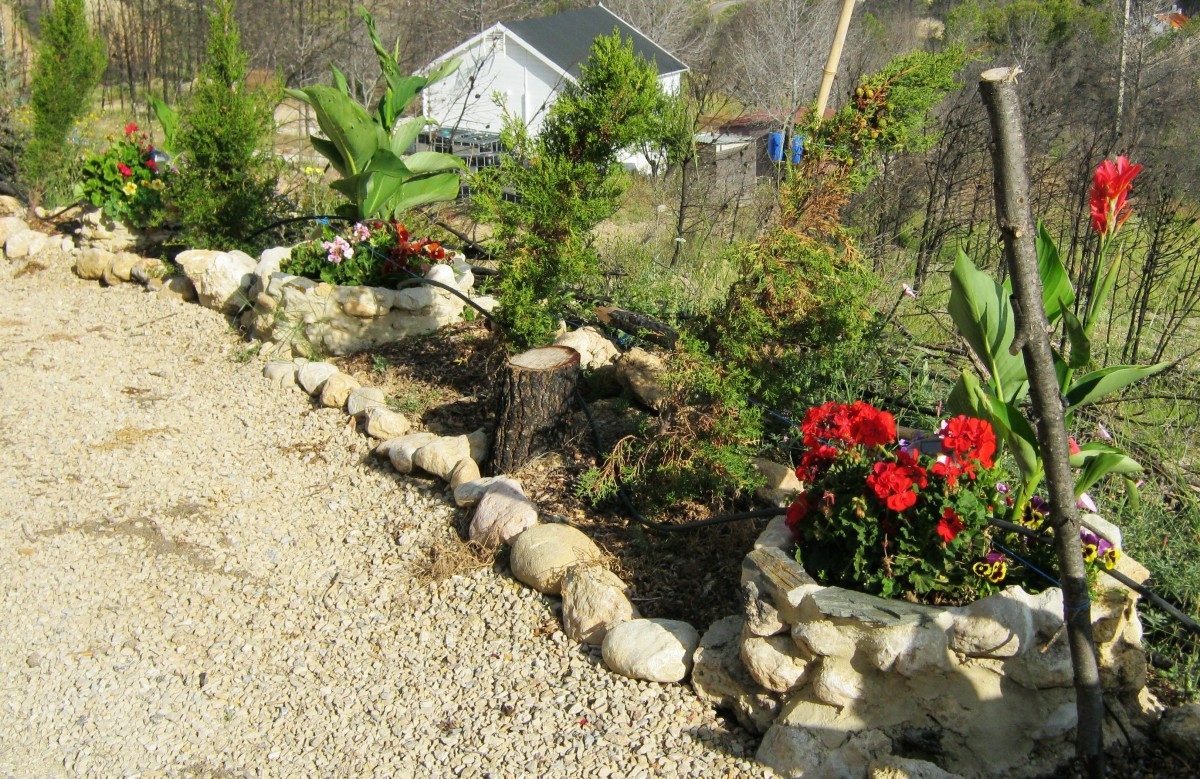 I built these planters in the spring to beautify the side of the track leading to my villa after a wildfire burned everything to the ground.