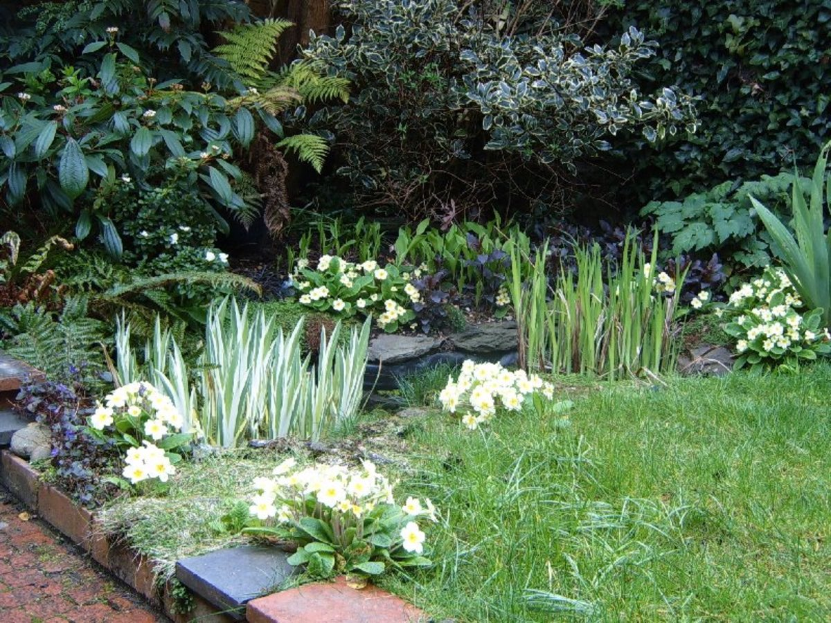 The pond with water iris and primroses. Photograph by Helen Lush