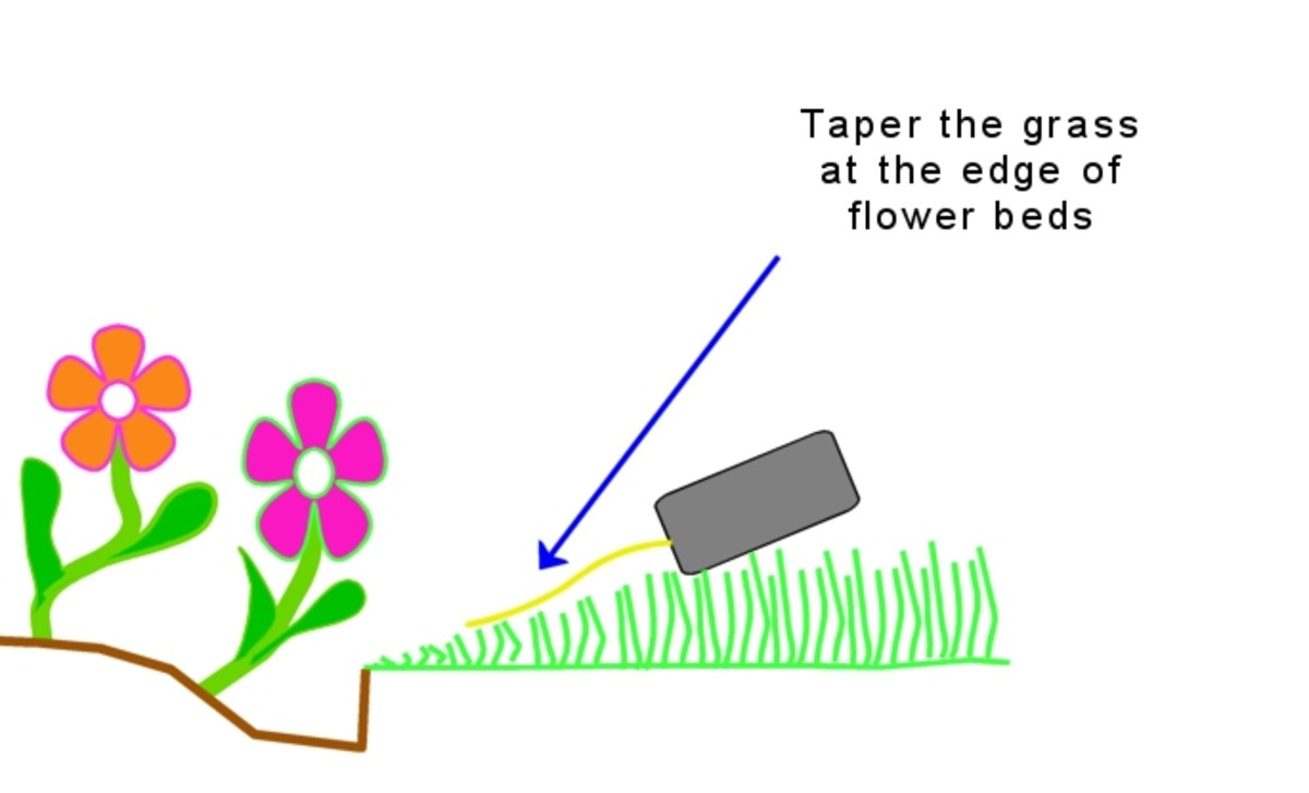 How to edge a lawn with a trimmer.