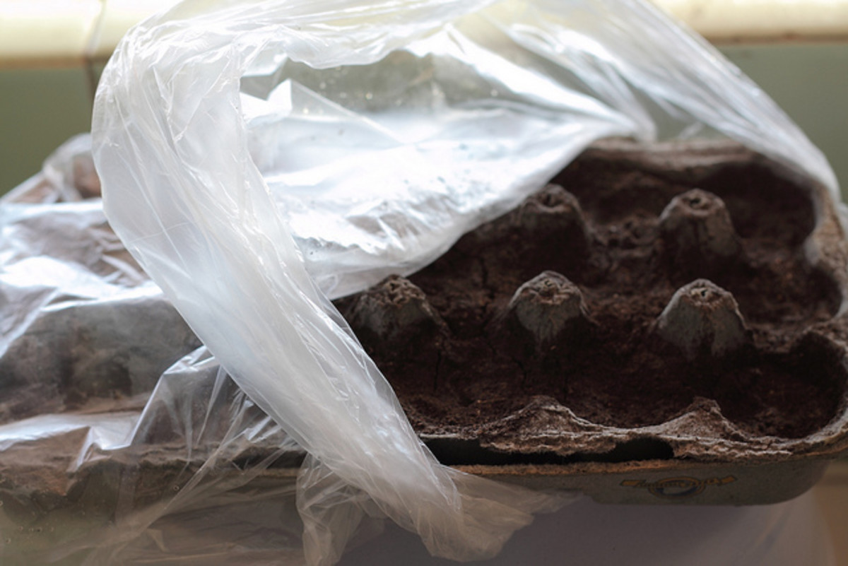 Cover the starting tray with a plastic bag.