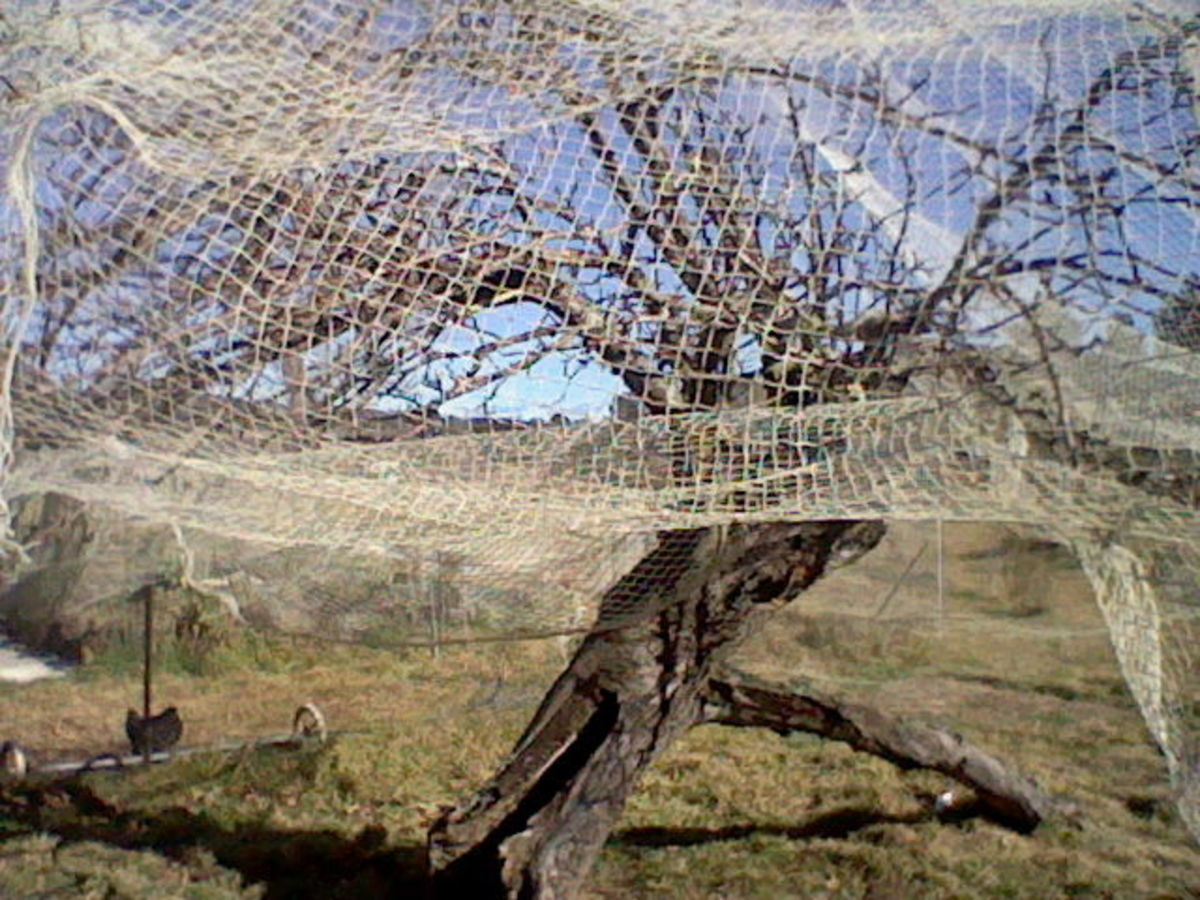give-new-life-to-old-apple-trees