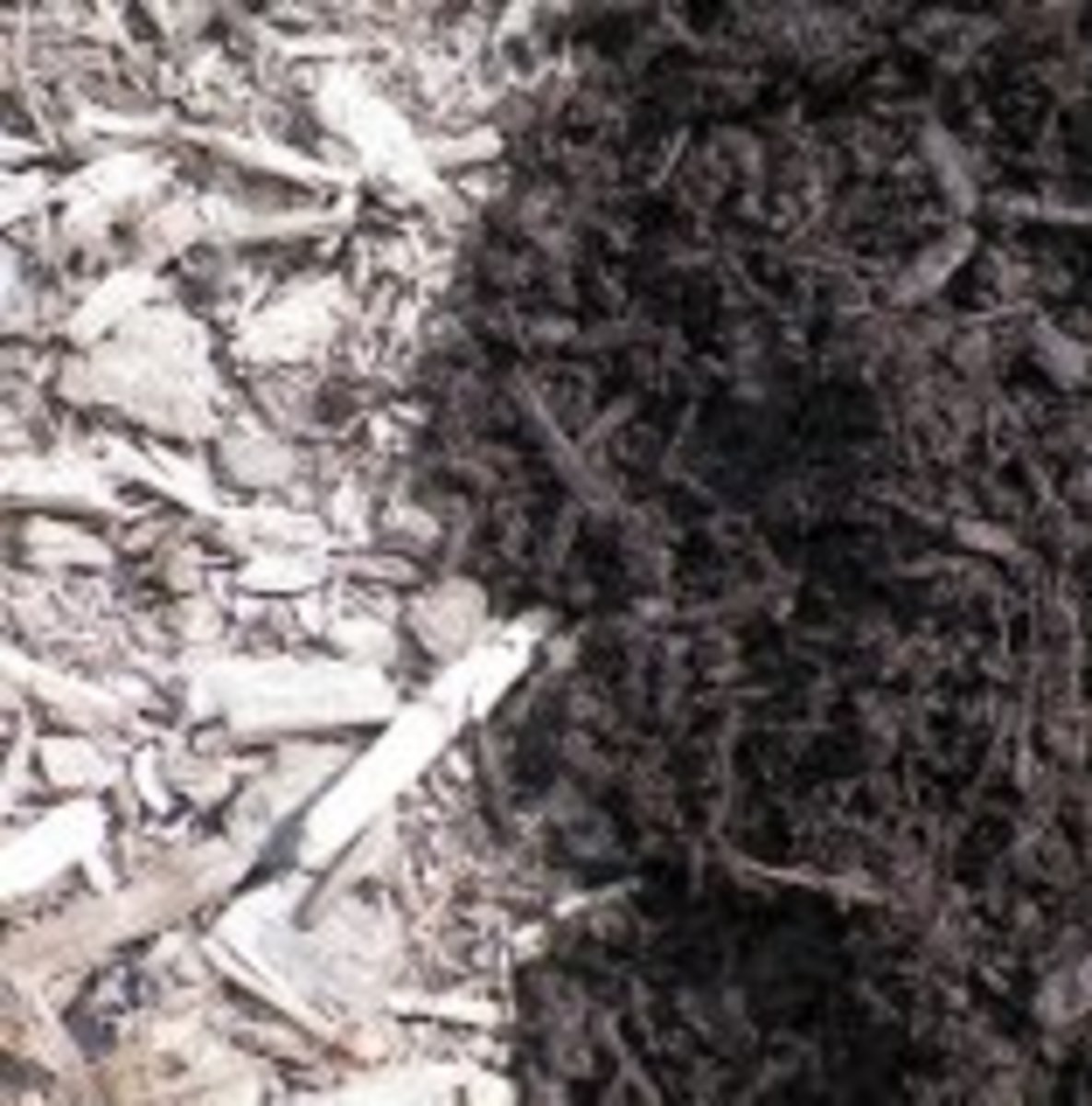 Left: One-year-old mulch 'guaranteed' to hold color for one year. Right: Same brand freshly applied.