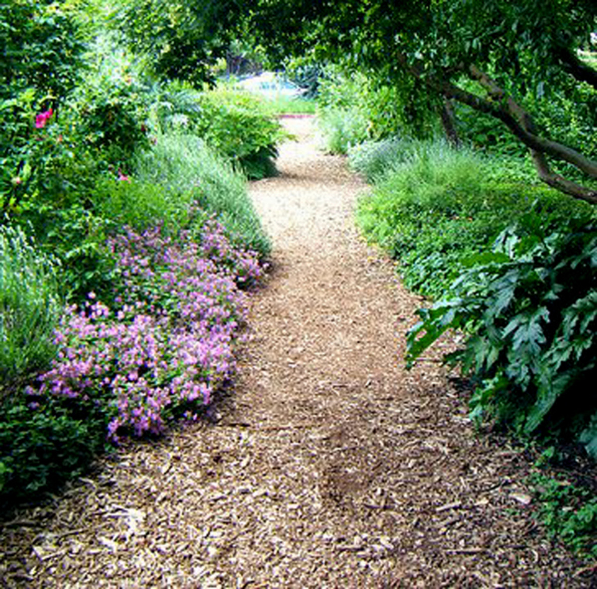 A mulch path using plantings as edging.