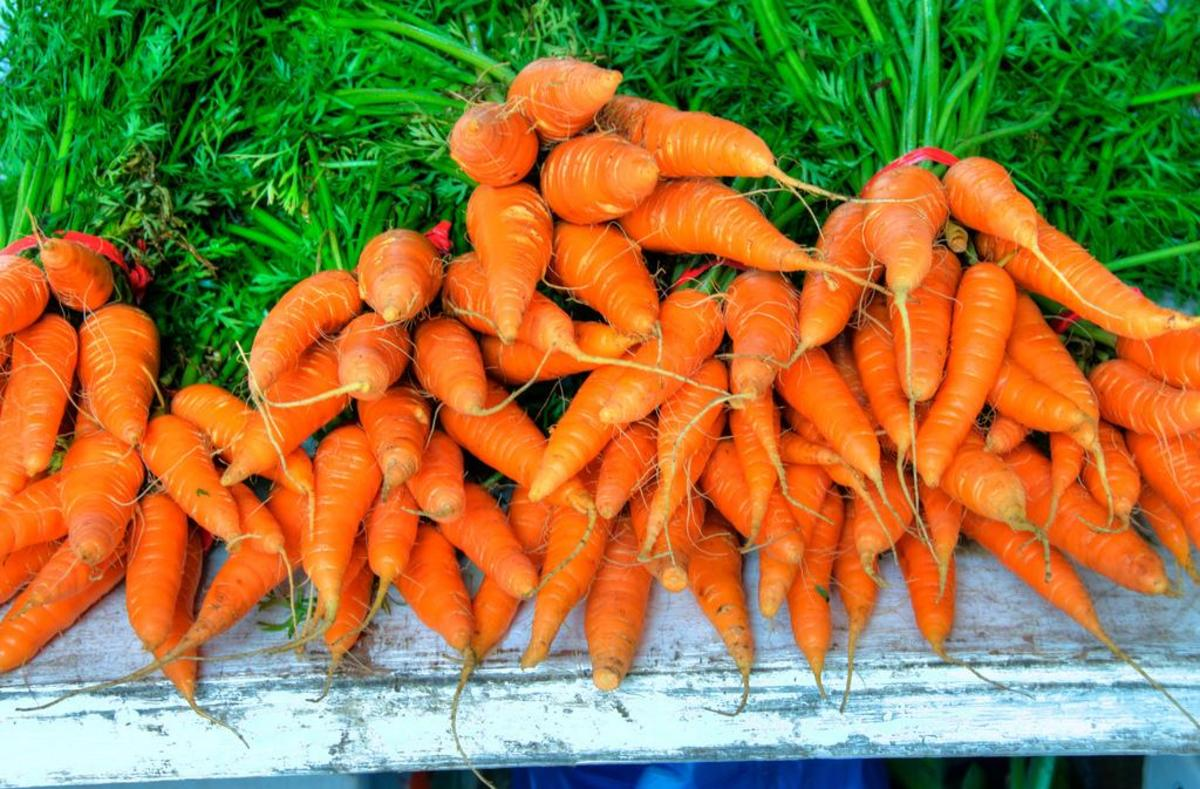 Carrots are an excellent vegetable to plant in summer, and they will happily grow in the shadows of taller companions.